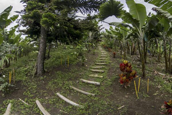 Casa Panorama Pijao Te ofrecemos que hacer y hospedaje en el Quindío Pijao